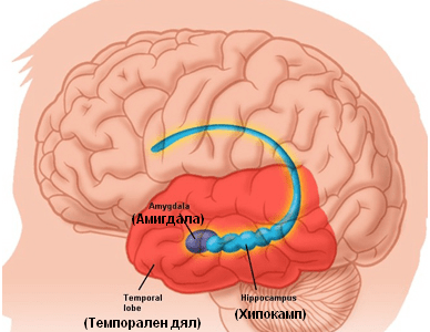 Как негативните емоции разрушават мозъка и организма ни